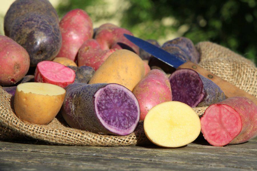 ziemniaki i ich historia