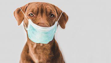 koronawirus u psów i kotów